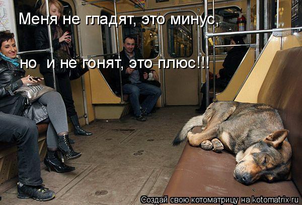 Котоматрица: Меня не гладят, это минус, но  и не гонят, это плюс!!!