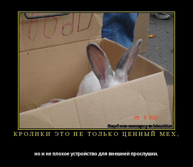 Котоматрица: Кролики это не только ценный мех, но и не плохое устройство для внешней прослушки.