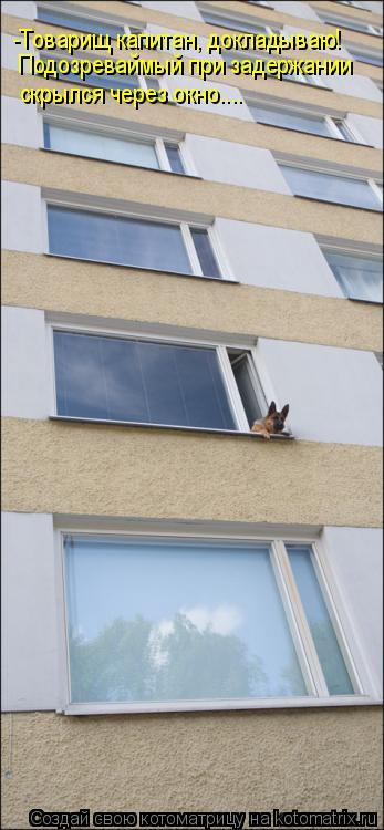 Котоматрица: -Товарищ капитан, докладываю! Подозреваймый при задержании скрылся через окно....