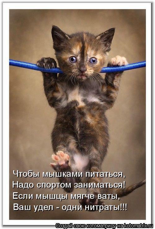 Котоматрица: Чтобы мышками питаться, Чтобы мышками питаться, Надо спортом заниматься! Если мышцы мягче ваты, Ваш удел - одни нитраты!!!