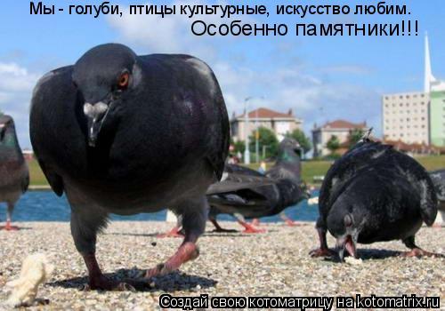 Котоматрица: Мы - голуби, птицы культурные, искусство любим. Особенно памятники!!!
