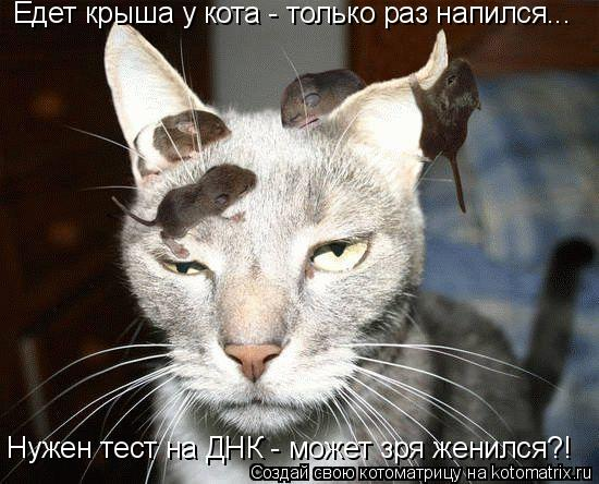 Котоматрица: Едет крыша у кота - только раз напился... Нужен тест на ДНК - может зря женился?!