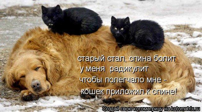 Котоматрица: старый стал, спина болит у меня  радикулит чтобы полегчало мне - кошек приложил к спине!