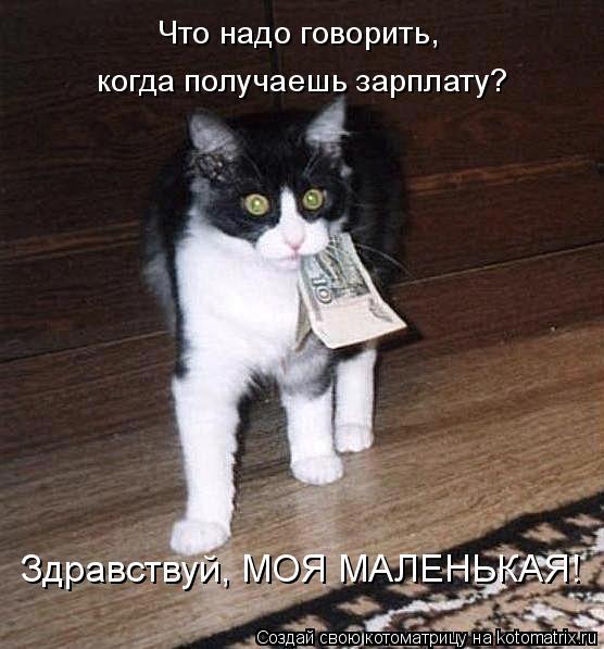 Котоматрица: Что надо говорить,  когда получаешь зарплату? Здравствуй, МОЯ МАЛЕНЬКАЯ!