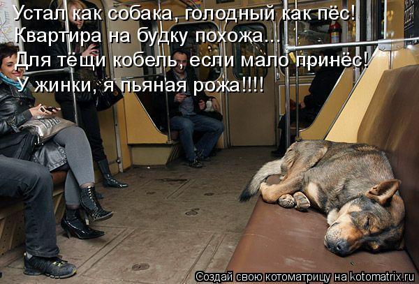 Котоматрица: Устал как собака, голодный как пёс! Квартира на будку похожа... Для тёщи кобель, если мало принёс! У жинки, я пьяная рожа!!!!