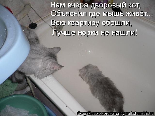 Котоматрица: Нам вчера дворовый кот, Объяснил где мышь живёт... Всю квартиру обошли, Лучше норки не нашли!