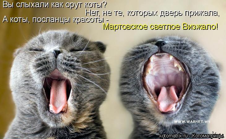 Котоматрица: Нет, не те, которых дверь прижала, А коты, посланцы красоты -  Мартовское светлое Визжало! Вы слыхали как орут коты?