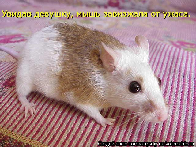 Котоматрица: Увидав девушку, мышь завизжала от ужаса.