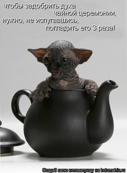 Котоматрица: чтобы задобрить духа  чайной церемонии, нужно, не испугавшись, погладить его 3 раза!