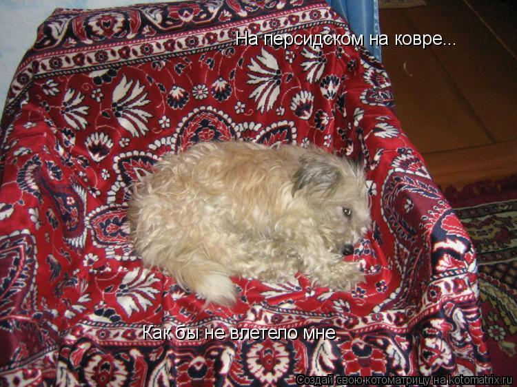 Секс на персидском ковре фото 21 фотография