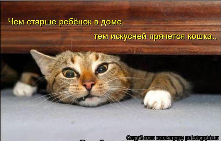 Котоматрица: Чем старше ребёнок в доме, тем искусней прячется кошка..