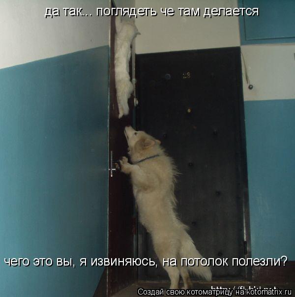 Котоматрица: чего это вы, я извиняюсь, на потолок полезли? да так... поглядеть че там делается