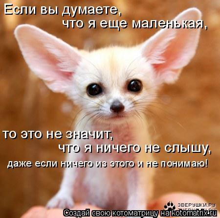 Котоматрица: Если вы думаете, что я еще маленькая, то это не значит,  что я ничего не слышу, даже если ничего из этого и не понимаю!