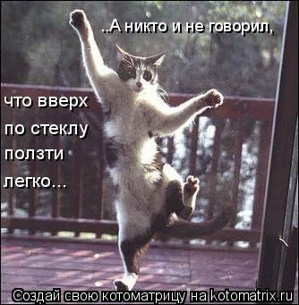 Котоматрица: что вверх по стеклу ..А никто и не говорил, ползти легко...