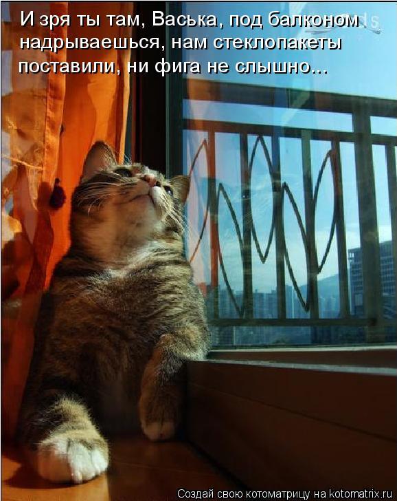 Котоматрица: И зря ты там, Васька, под балконом  надрываешься, нам стеклопакеты   поставили, ни фига не слышно...