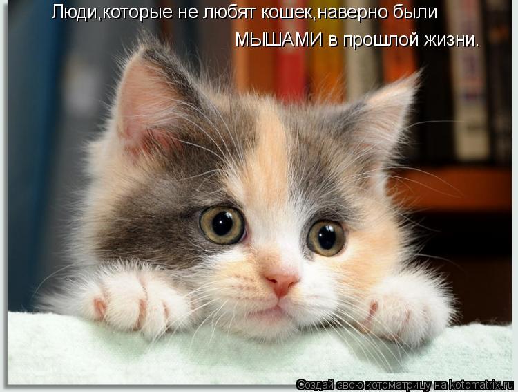 Люди,которые не любят кошек,наверно были МЫШАМИ в прошлой жизни.