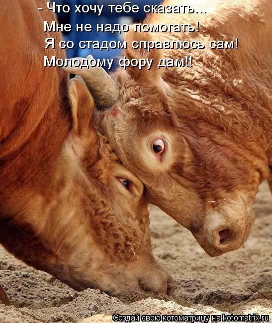 Котоматрица: - Что хочу тебе сказать... Мне не надо помогать! Я со стадом справлюсь сам! Молодому фору дам!!