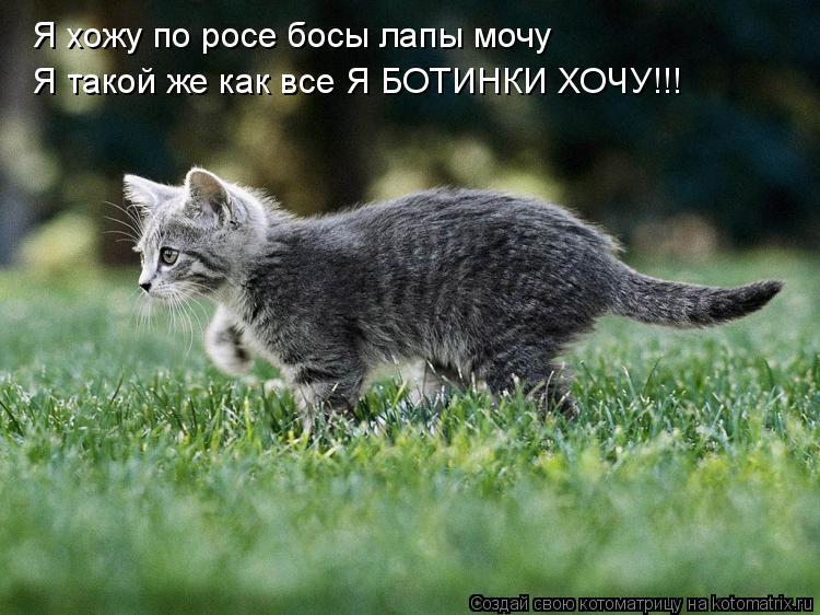 Котоматрица: Я хожу по росе босы лапы мочу Я такой же как все Я БОТИНКИ ХОЧУ!!!