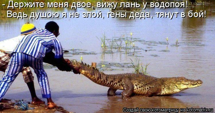 Котоматрица: - Держите меня двое, вижу лань у водопоя! Ведь душою я не злой, гены деда, тянут в бой!