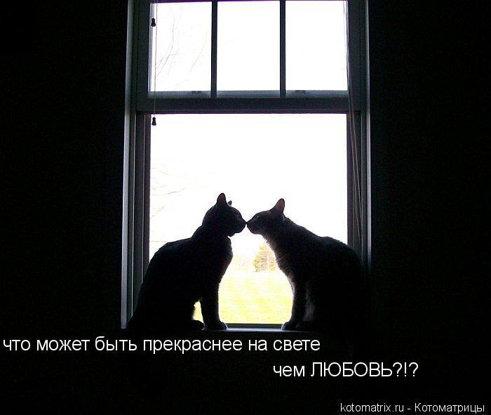 Котоматрица: что может быть прекраснее на свете чем ЛЮБОВЬ?!?