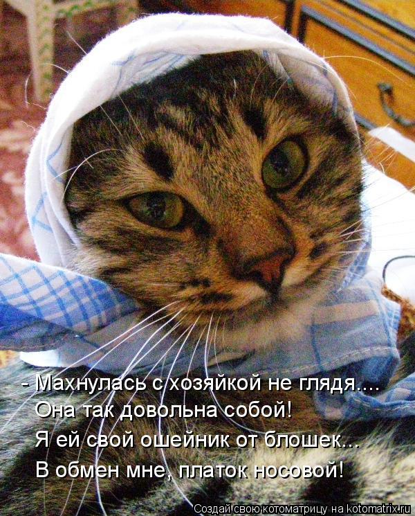 Котоматрица: - Махнулась с хозяйкой не глядя.... В обмен мне, платок носовой! Она так довольна собой! Она так довольна собой! Я ей свой ошейник от блошек...