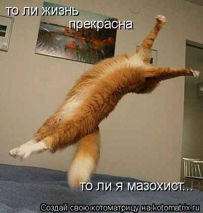 Котоматрица: то ли жизнь  прекрасна то ли я мазохист...