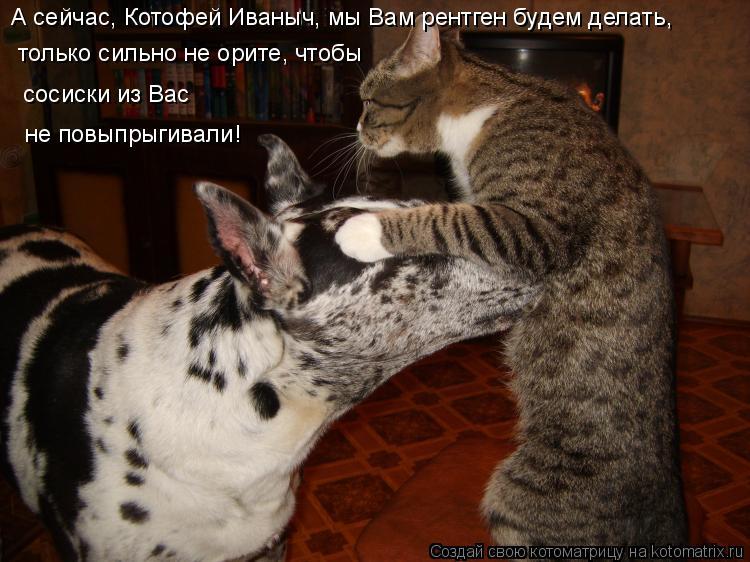 Котоматрица: А сейчас, Котофей Иваныч, мы Вам рентген будем делать, только сильно не орите, чтобы сосиски из Вас  не повыпрыгивали!