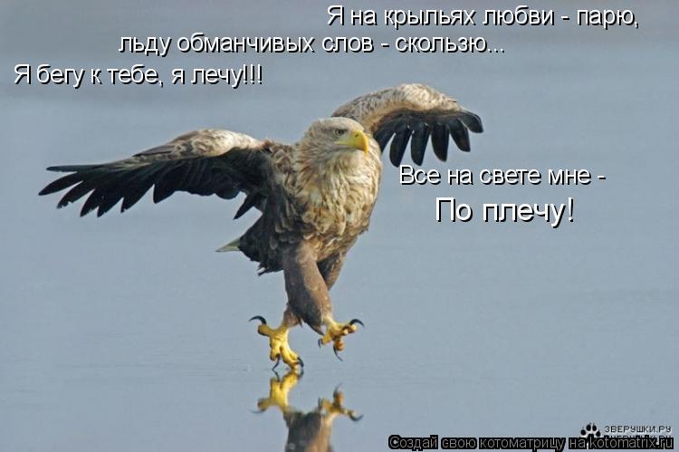 Котоматрица: По плечу! Я на крыльях любви - парю, льду обманчивых слов - скользю... Все на свете мне - Я бегу к тебе, я лечу!!!