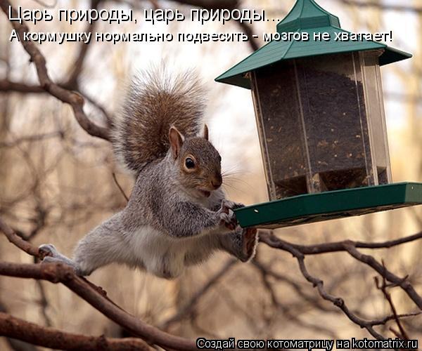 Котоматрица: Царь природы, царь природы... А кормушку нормально подвесить - мозгов не хватает!