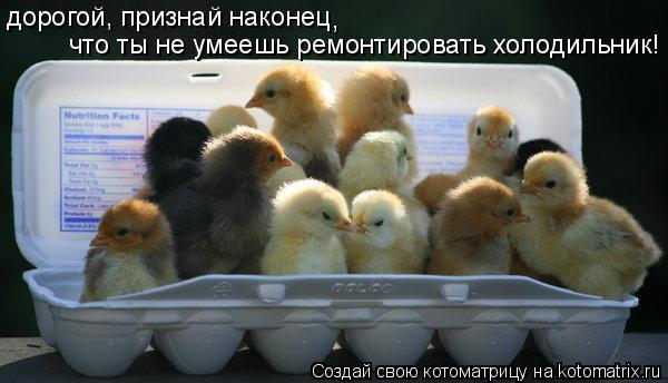 Котоматрица: дорогой, признай наконец , что ты не умеешь ремонтировать холодильник!