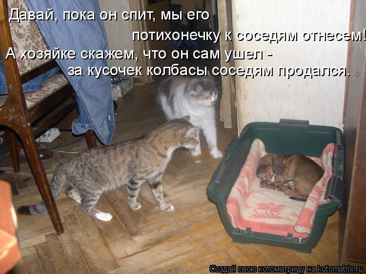 Котоматрица: Давай, пока он спит, мы его потихонечку к соседям отнесем! А хозяйке скажем, что он сам ушел -  за кусочек колбасы соседям продался.