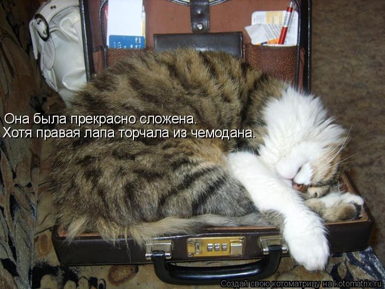 Котоматрица: Она была прекрасно сложена. Хотя правая лапа торчала из чемодана.