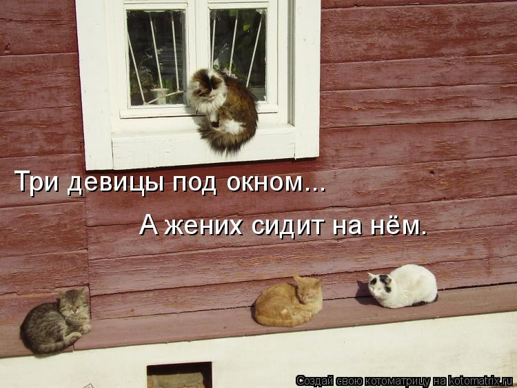 Котоматрица: Три девицы под окном... А жених сидит на нём.