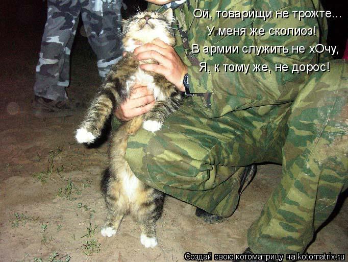 Котоматрица: У меня же сколиоз! Ой, товарищи не трожте... В армии служить не хОчу, Я, к тому же, не дорос!
