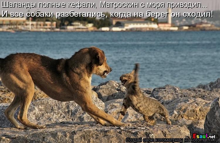 Котоматрица: Шаланды полные кефали, Матроскин с моря приводил... И все собаки разбегались, когда на берег он сходил!