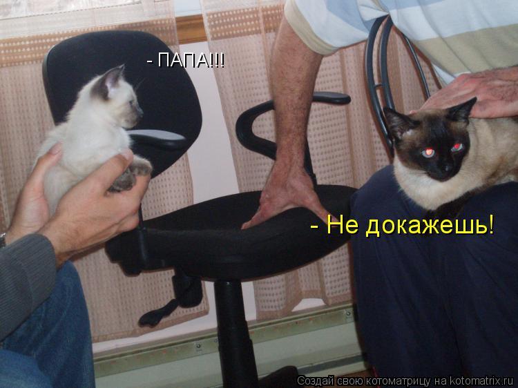 Котоматриця!)))) - Страница 4 Pz