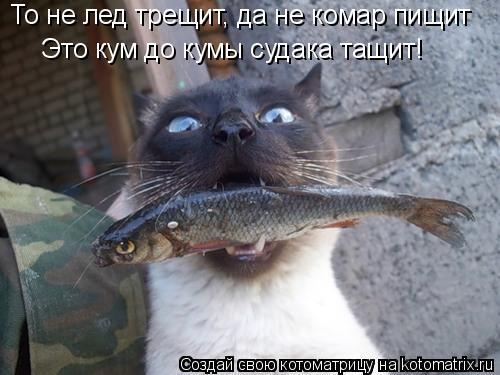 Котоматрица: То не лед трещит, да не комар пищит Это кум до кумы судака тащит!