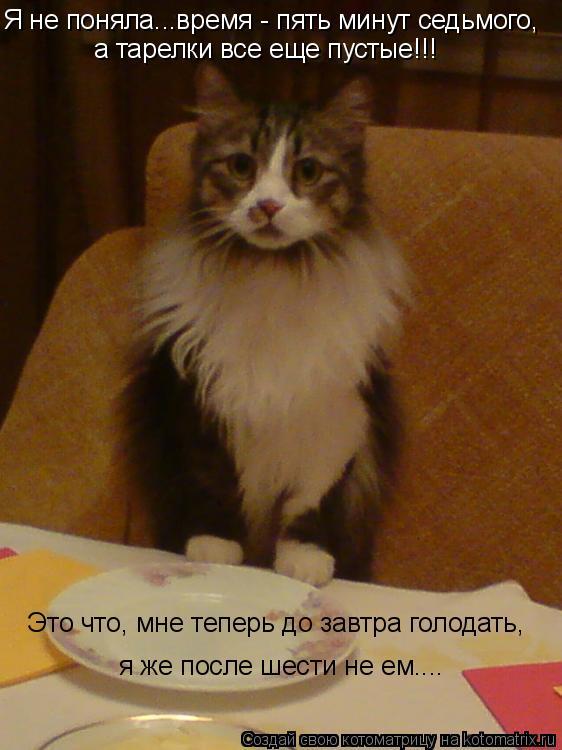 Котоматрица: Я не поняла...время - пять минут седьмого, а тарелки все еще пустые!!! Это что, мне теперь до завтра голодать, я же после шести не ем....