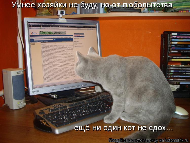 Котоматрица: Умнее хозяйки не буду, но от любопытства ещё ни один кот не сдох...