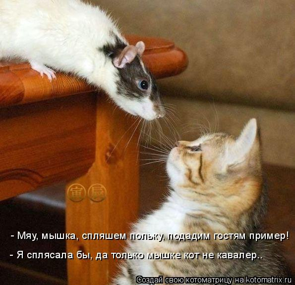 Котоматрица: - Мяу, мышка, спляшем польку, подадим гостям пример! - Я сплясала бы, да только мышке кот не кавалер..