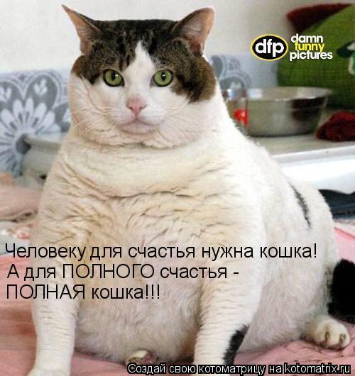 Котоматрица: Человеку для счастья нужна кошка! А для ПОЛНОГО счастья -  ПОЛНАЯ кошка!!!