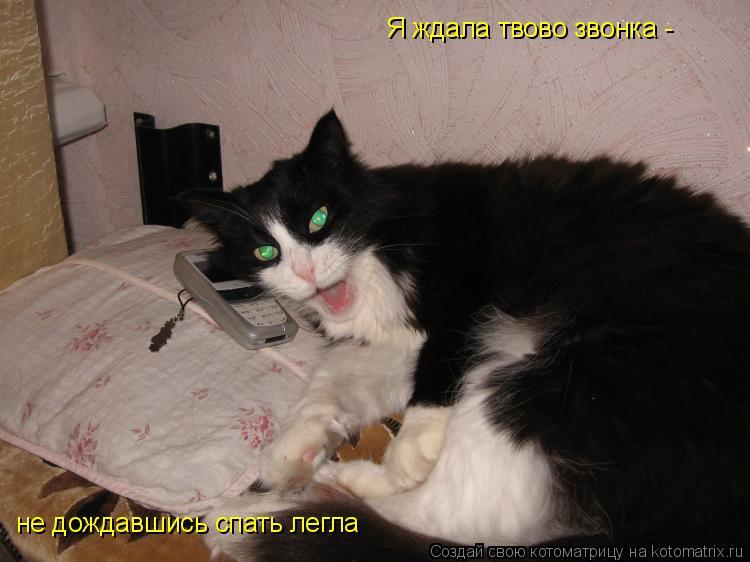 Котоматрица: не дождавшись спать легла Я ждала твово звонка -