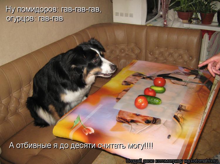 Котоматрица: Ну помидоров: гав-гав-гав, огурцов: гав-гав А отбивные я до десяти считать могу!!!!