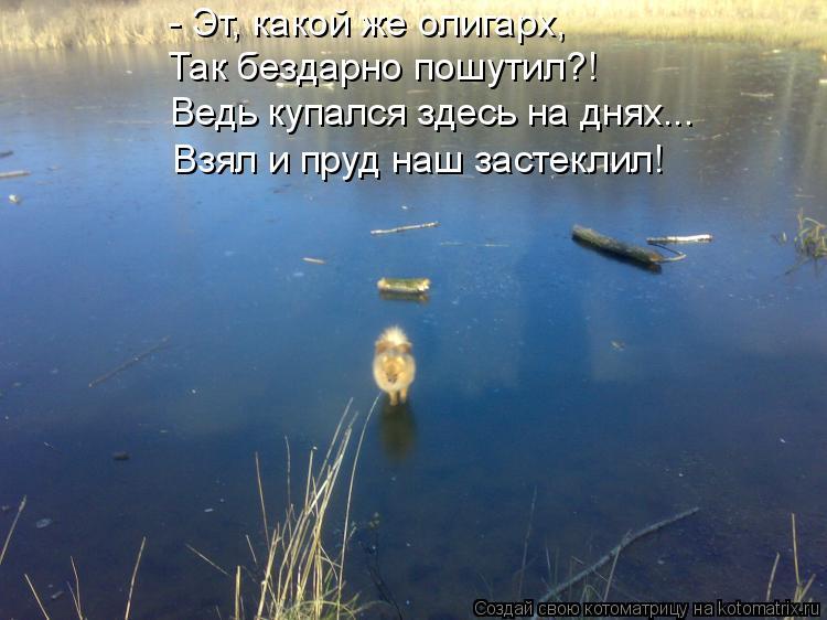 Котоматрица: - Эт, какой же олигарх, Так бездарно пошутил?! Ведь купался здесь на днях... Взял и пруд наш застеклил!