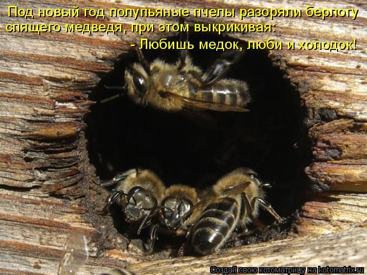 Котоматрица: Под новый год полупьяные пчелы разоряли берлогу спящего медведя, при этом выкрикивая: - Любишь медок, люби и холодок!