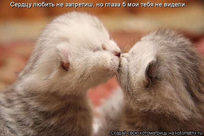 Котоматрица: Сердцу любить не запретиш, но глаза б мои тебя не видели.