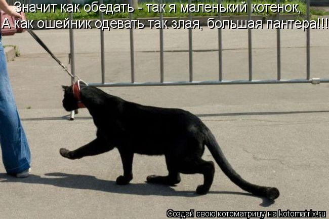Котоматрица: Значит как обедать - так я маленький котенок, А как ошейник одевать так злая, большая пантера!!!