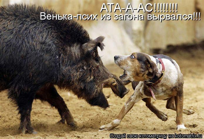 Котоматрица: АТА-А-АС!!!!!!!! Венька-псих из загона вырвался!!!