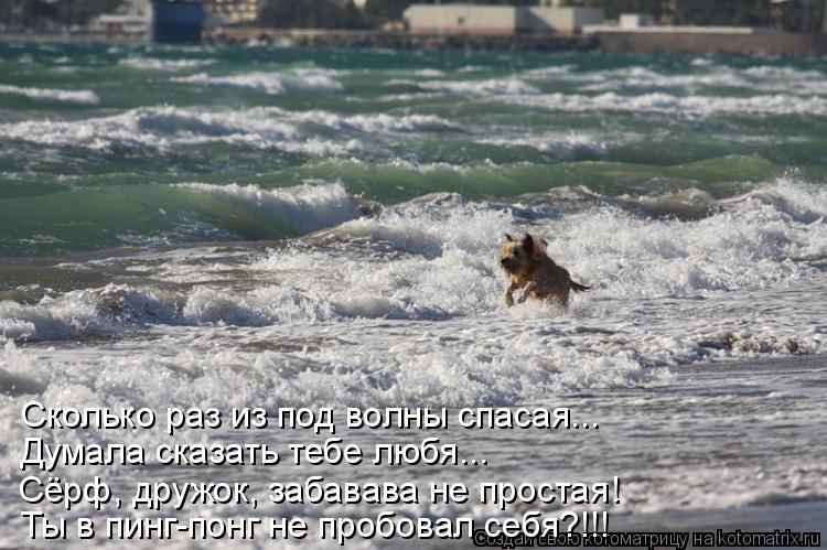 Котоматрица: Сколько раз из под волны спасая... Думала сказать тебе любя... Сёрф, дружок, забавава не простая! Ты в пинг-понг не пробовал себя?!!!
