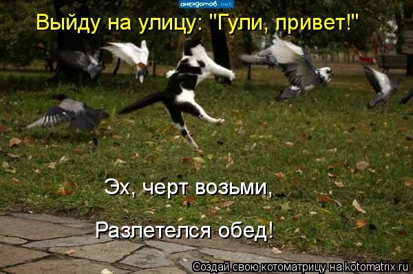 """Котоматрица: Эх, черт возьми, Разлетелся обед! Выйду на улицу: """"Гули, привет!"""""""